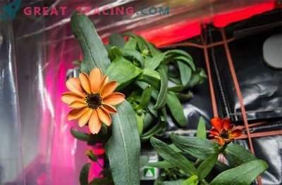 Kuidas õnnestus see lill kosmosevormist päästa